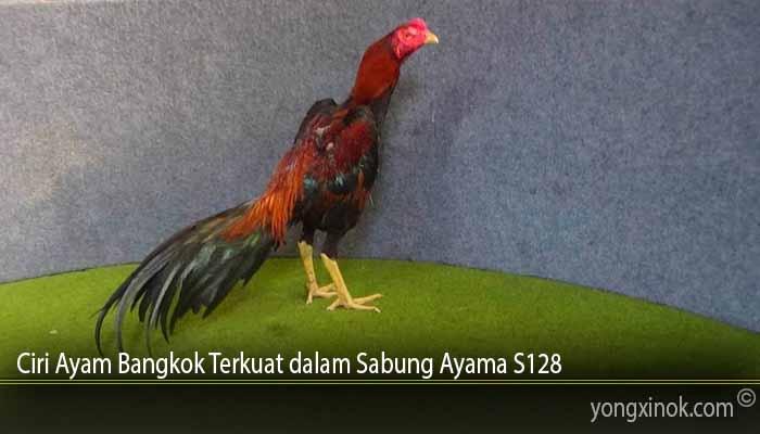 Ciri Ayam Bangkok Terkuat dalam Sabung Ayama S128